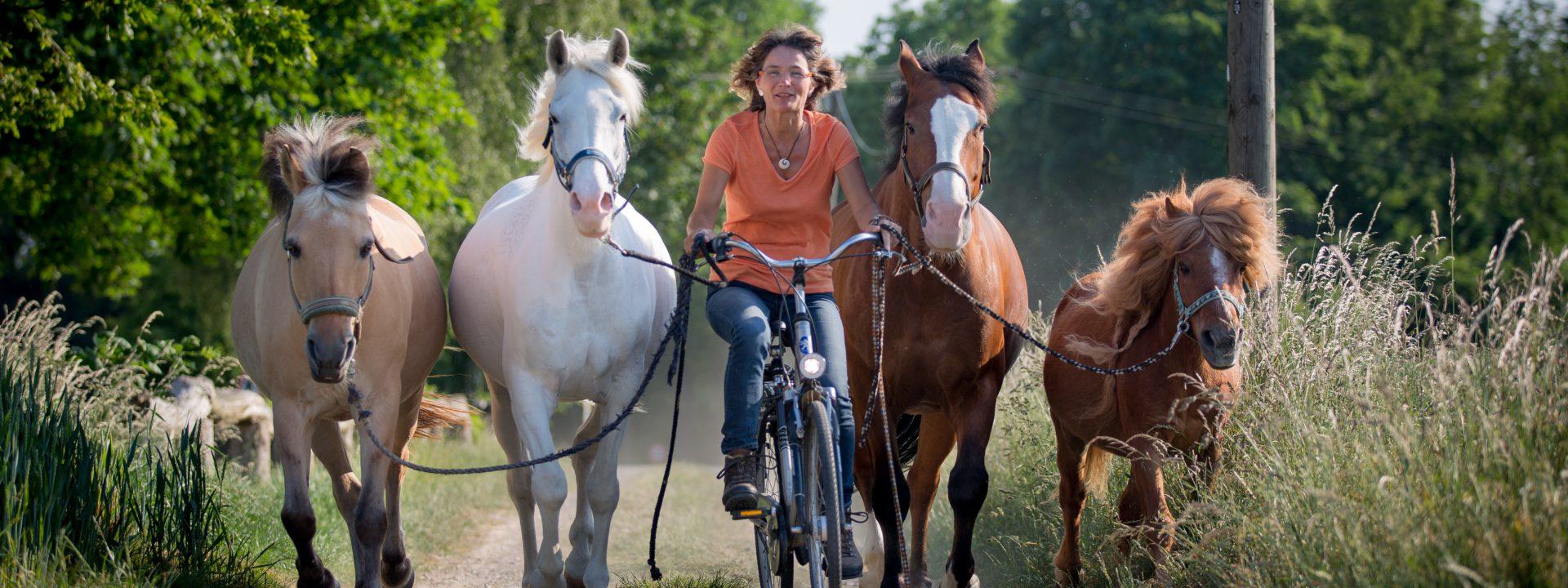Verbindung mit Pferden