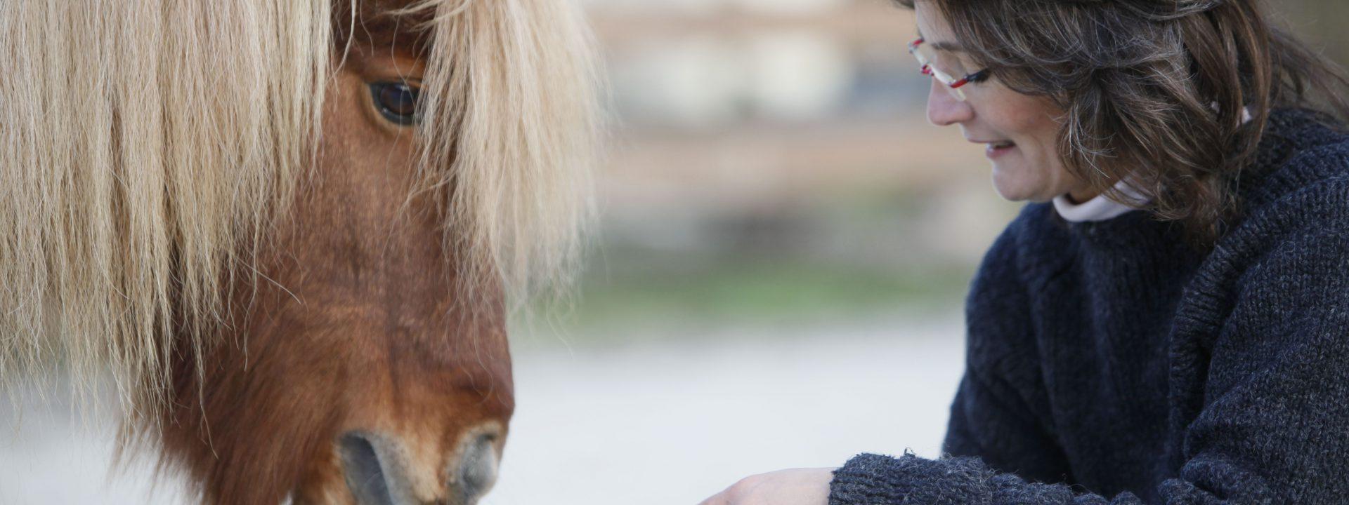 Den Ponys ganz nah