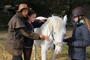 Achtsame Begegnung mit Pferden